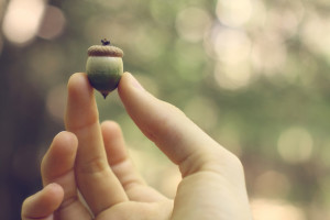 Acorn by eflon_Flickr